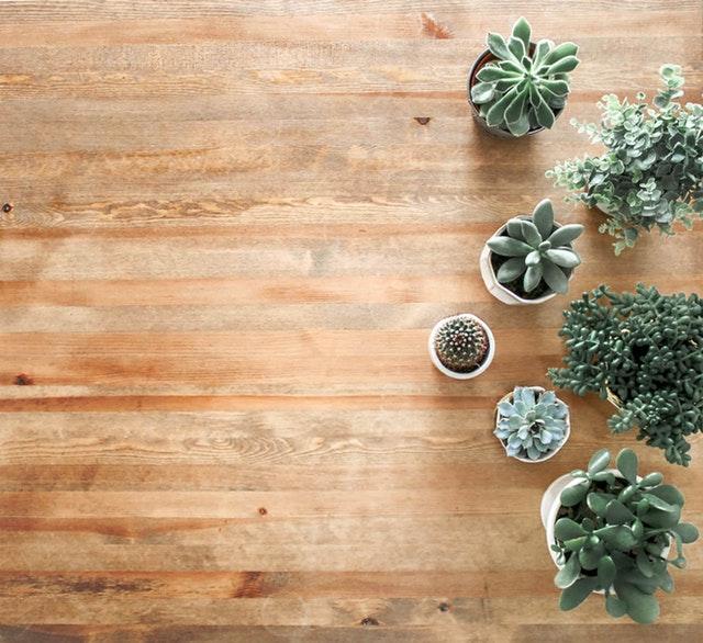 podlaha s kaktusy